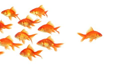 untemplate_goldfish