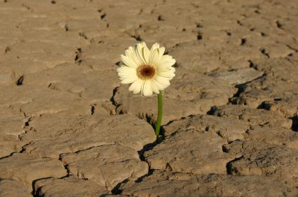 flower_in_drought